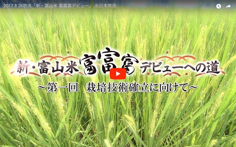 「新・富山米「富富富」デビューへの道」〜第1回〜