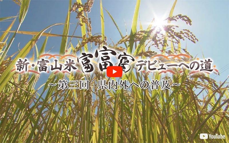 「新・富山米「富富富」デビューへの道」〜第3回〜